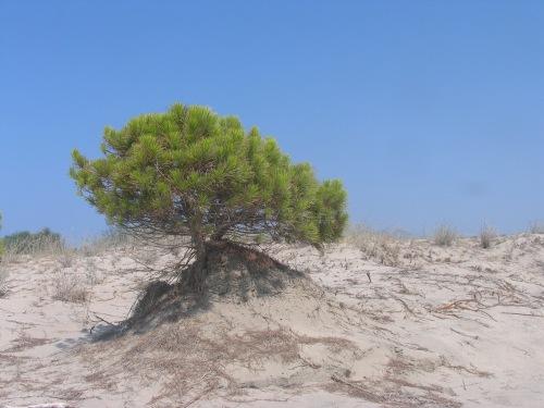Baum_im_sand