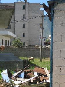 Orikum. Schafe zw. den einfachen Häusern