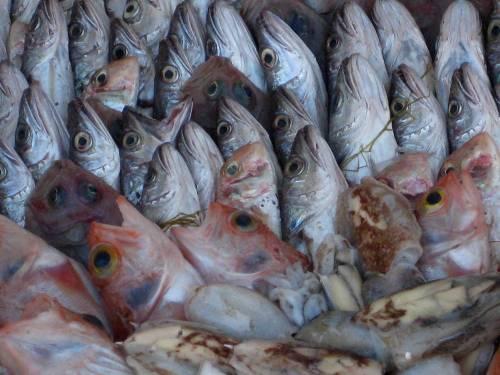 Fischversteigerung_6