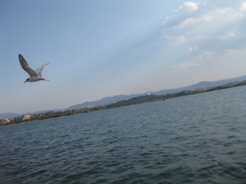 Eine_seeschwalbe
