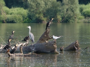 Auch Vögel gehen auf Reise (2) (2000x1500)