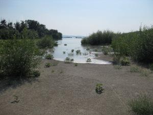 Büsche, vom Hochwasser überschwemmt