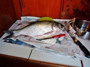Unser Fisch, war aber im Geschmack nicht der Hit