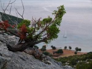 Kleine Wanderung auf den Hügel (1500x1125)