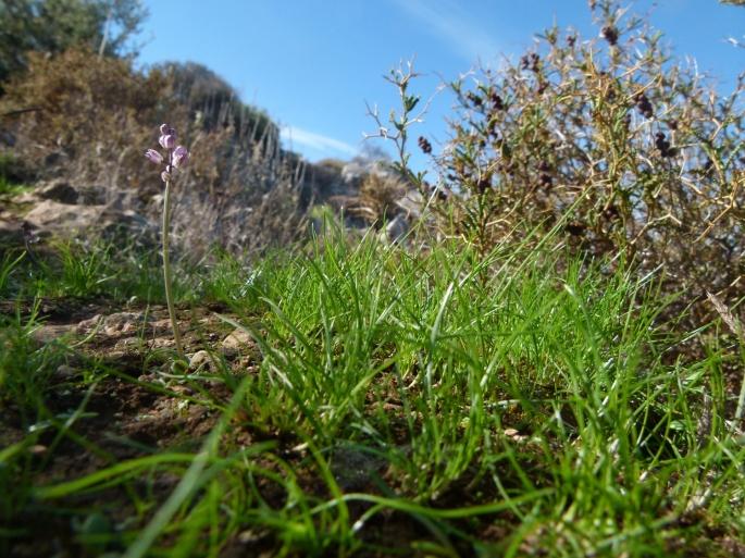 Erstes Grün im Herbst (1500x1125)