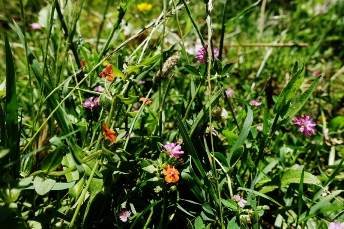 Frühlingswiese (800x533)