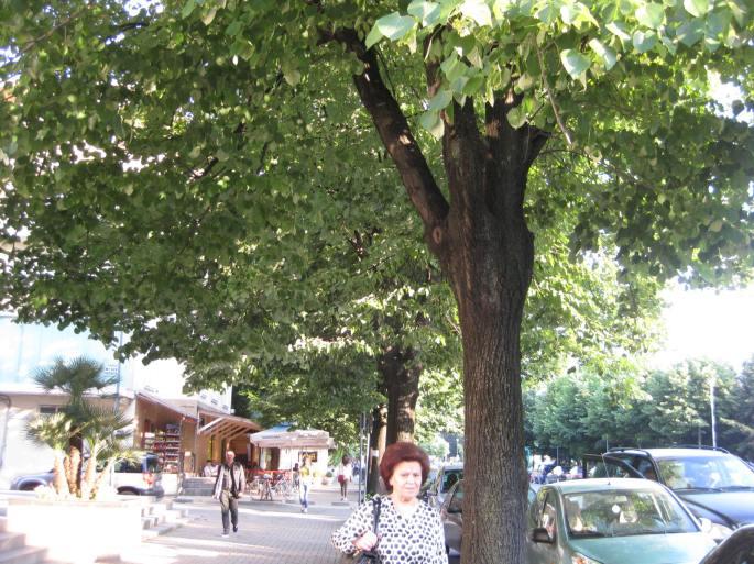 Tirana, die alban (2)