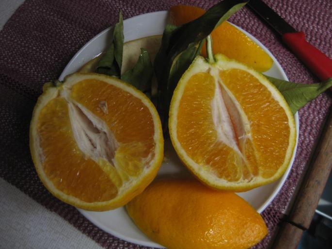 Orangen!!! ...frisch vom Baum