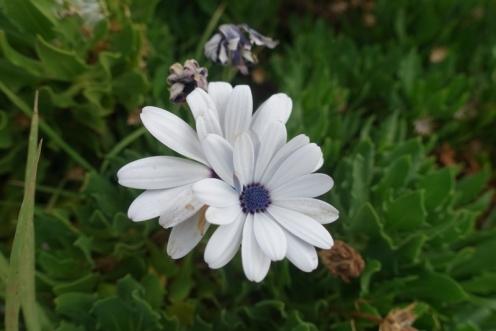 Wenig Blumen blühen im Sommer