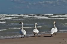 Drei Strandgäste (Copy)