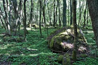 Wald auf der kleinen Hafeninsel (Copy)