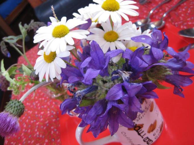 bis Kopmannsholmengr.büschelartige Glockenblumen (Copy) - Kopie