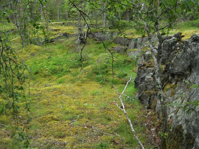 Natur in Grün und Blumenpracht (4) (Copy)