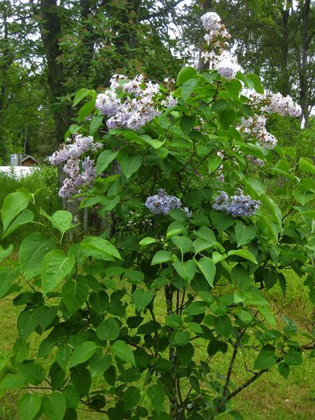 Natur in Grün und Blumenpracht (6) (Copy)