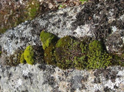 Urnatur Norrbyskär Fjordtundra (12) (Copy)