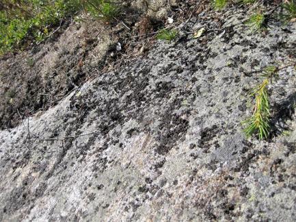 Urnatur Norrbyskär Fjordtundra (4) (Copy)