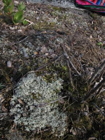 Urnatur Norrbyskär Fjordtundra (9) (Copy)
