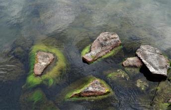 Bewachsene Steine (Copy)