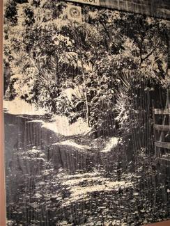 Café v. Nicaragua (7) (Copy)