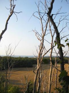 Dürre Bäume, Spechtparadies (1) (Copy)