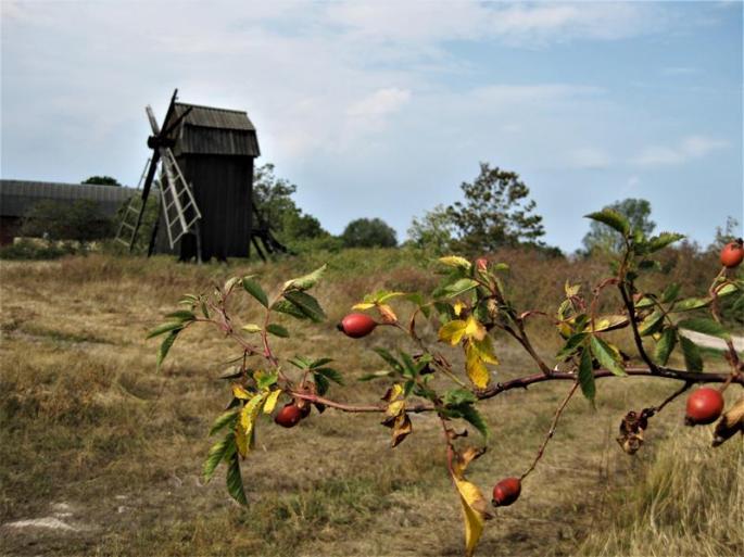 IMG_5908-Mühle Nr.3 (Copy)