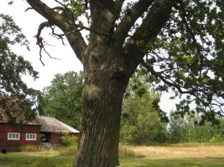 IMG_5930-Natur-Minne, ein Denk-mal (Copy)