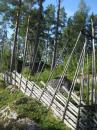 Kapellskär, Naturpfad Wald (12) (Copy)
