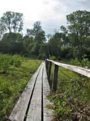 Kapellskär, Naturpfad Wald (13) (Copy)
