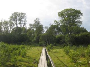 Kapellskär, Naturpfad Wald (14) (Copy)
