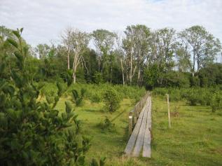 Kapellskär, Naturpfad Wald (17) (Copy)