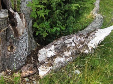 Kapellskär, Naturpfad Wald (20) (Copy)