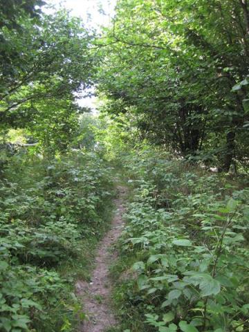 Kapellskär, Naturpfad Wald (21) (Copy)