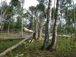 Kapellskär, Naturpfad Wald (22) (Copy)