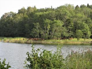 Kapellskär, Naturpfad Wald (23) (Copy)