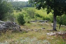Kapellskär, Naturpfad Wald (4) (Copy)