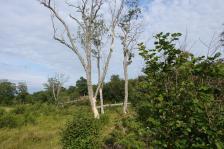 Kapellskär, Naturpfad Wald (7) (Copy)