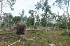Kapellskär, Naturpfad Wald (9) (Copy)