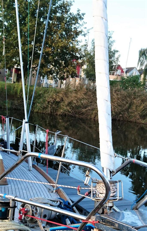 Am Boot ein Graureiher!