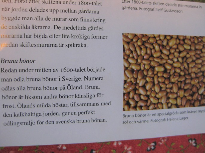 Braune Bohnen v. Öland