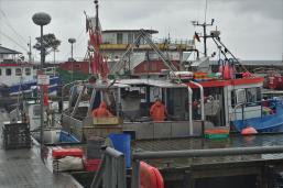Im umtriebigen Fischereibereich (Copy)