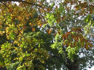 IMG_6184 Herbstlaub 19.9. (Copy)